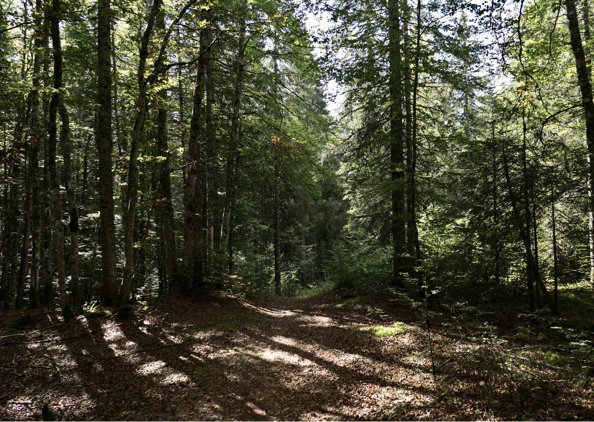 Vallée de Joux_17