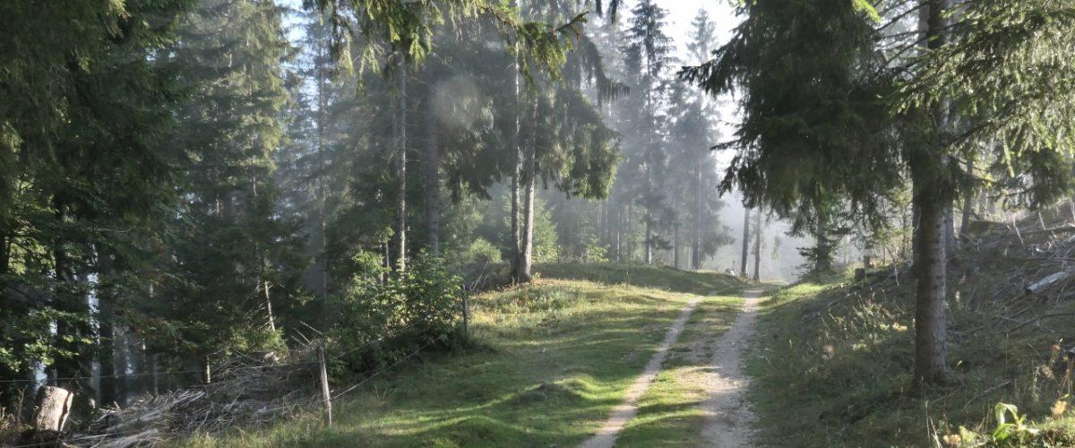 Vallée de Joux_header