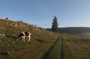 Vallée de Joux gravel Mont Tendre 4