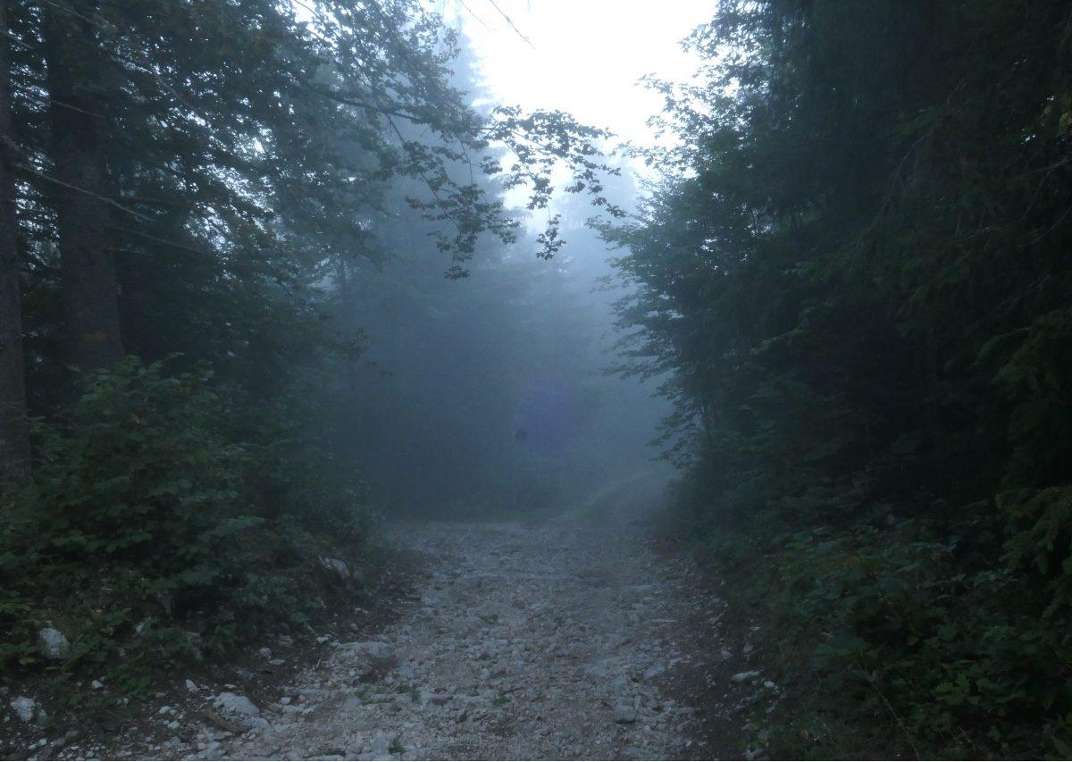 Vallée de Joux gravel Mont Tendre 2