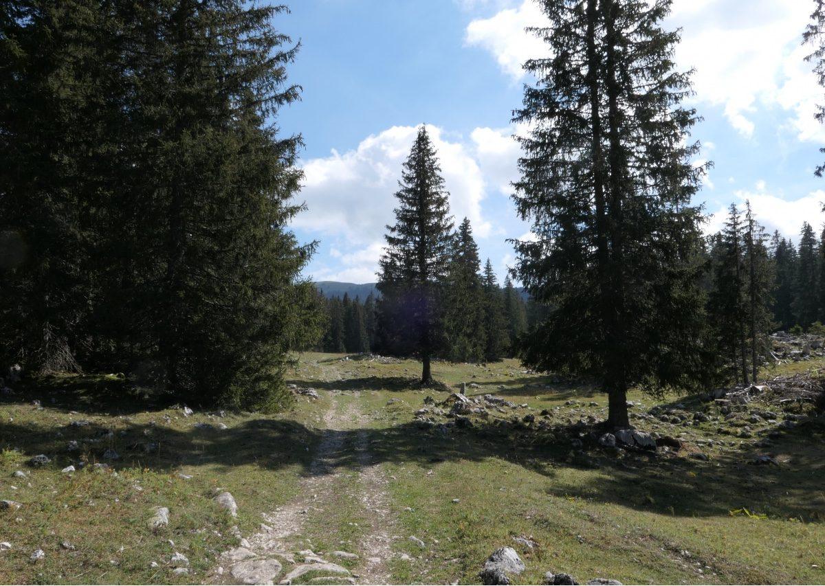 Vallée de Joux gravel Mont Tendre 9