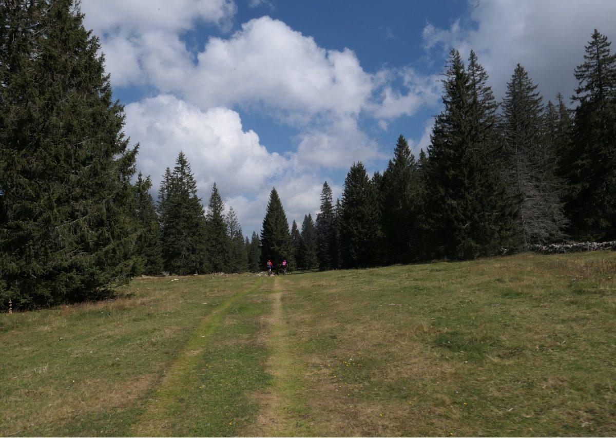 Vallée de Joux gravel Mont Tendre 6