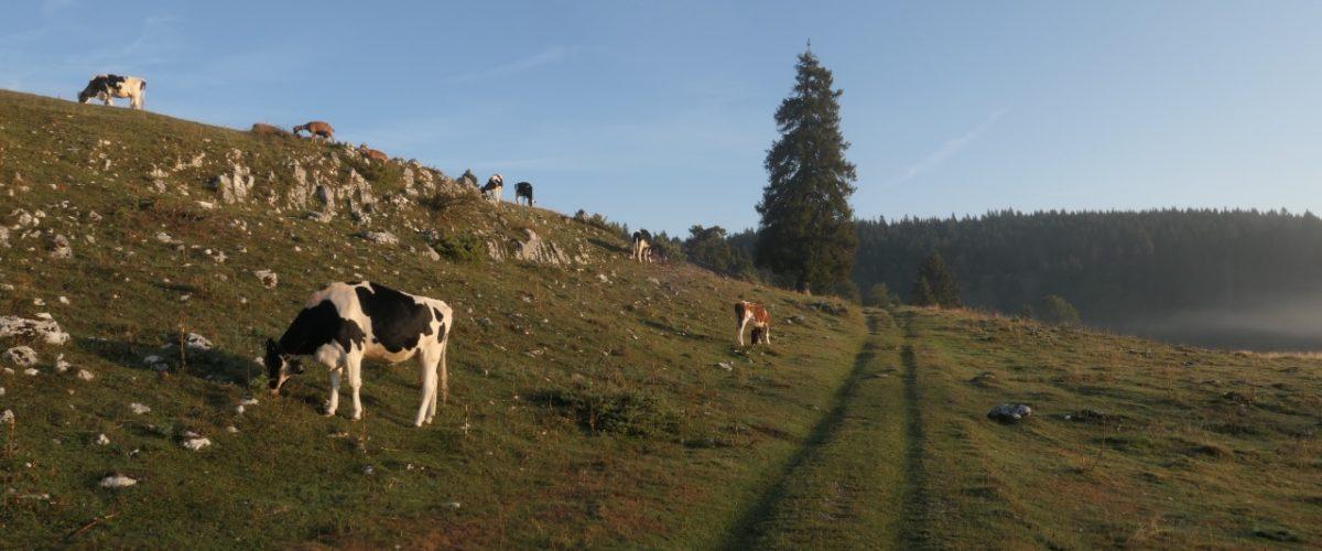 Vallée de Joux gravel Mont Tendre